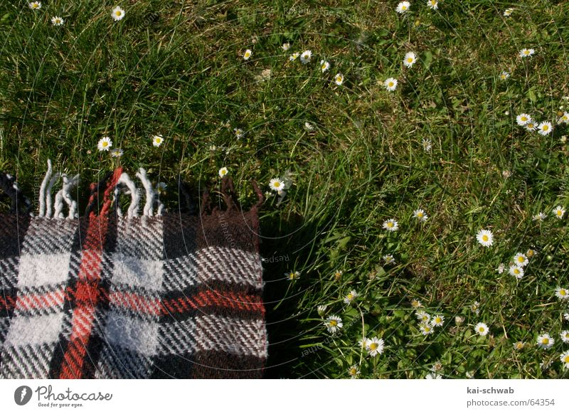 Green Relaxation Meadow Grass Leisure and hobbies Stripe Delicious Daisy Cozy Checkered Blanket Picnic Fringe Baden-Wuerttemberg