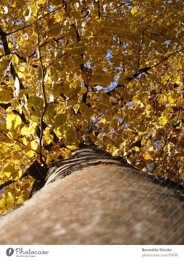 Autumn Tree Leaf Yellow Seasons Tree trunk Branch Nature