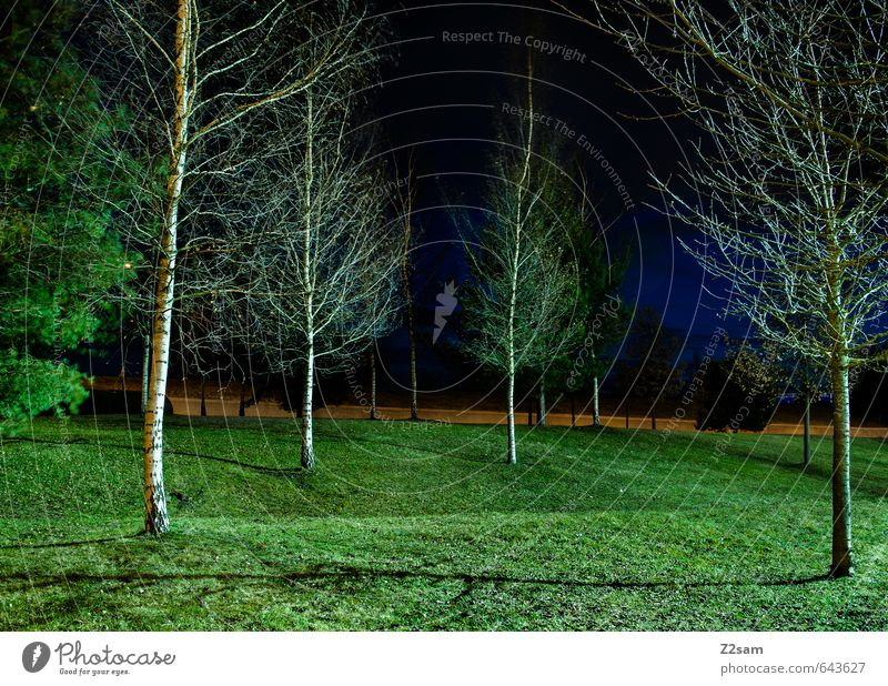 They're coming!!! Night sky Summer Tree Grass Bushes Town Park Athletic Dark Simple Elegant Cold Modern Gloomy Blue Green Calm Idyll Arrangement Surrealism