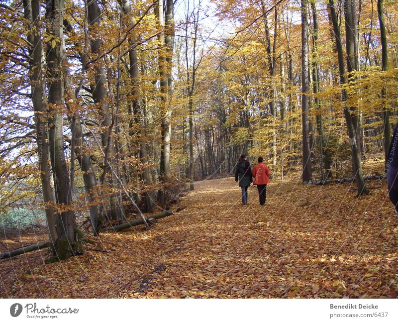 Human being Tree Leaf Yellow Forest Autumn Seasons