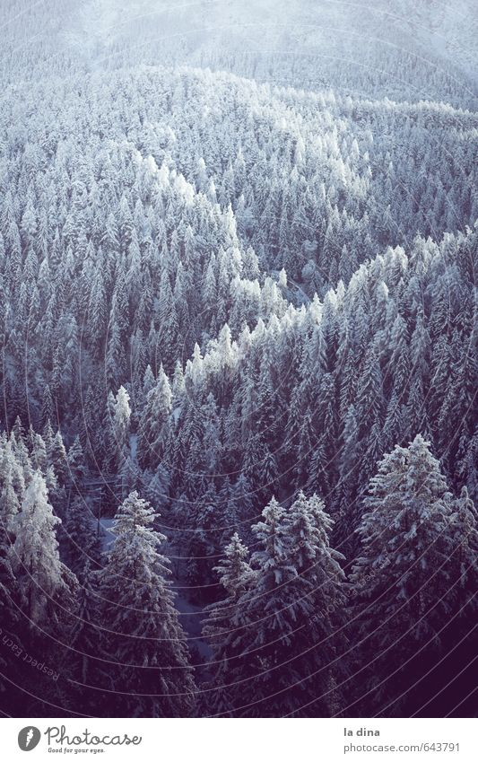 Nature Landscape Winter Far-off places Cold Forest Mountain Environment Hill Switzerland Treetop Canton Graubünden