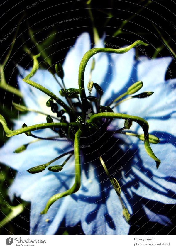 Medusa Tentacle Flower Blossom Light blue Green Macro (Extreme close-up) Close-up Blue zaret I don't know what it's like A flower is