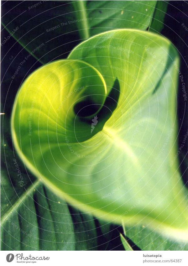 green heart Leaf Plant Green Relaxation Calm Contentment Exterior shot Bamboo stick Colour Motive