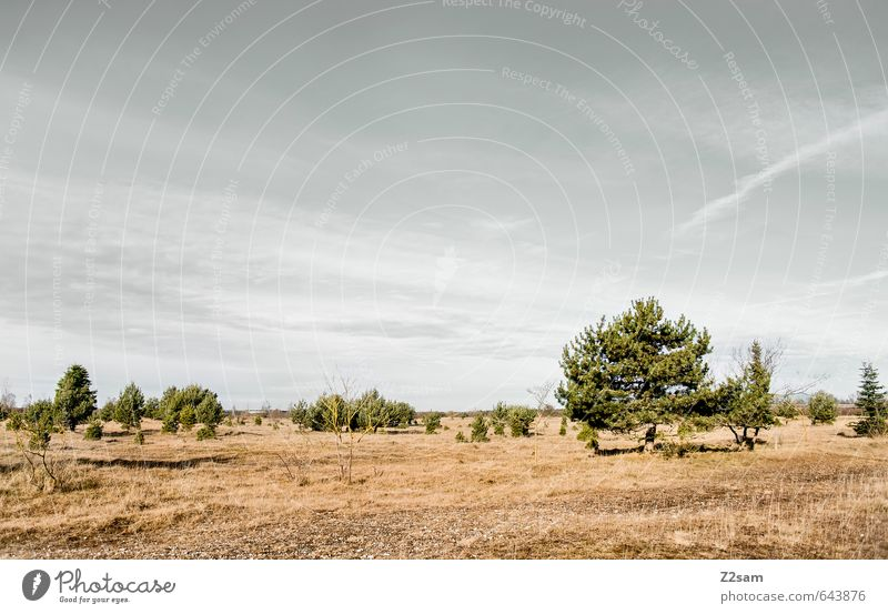 BAVARIAN DESERT Environment Nature Landscape Sky Horizon Autumn Drought Tree Grass Bushes Meadow Sustainability Natural Gloomy Dry Blue Brown Green Loneliness