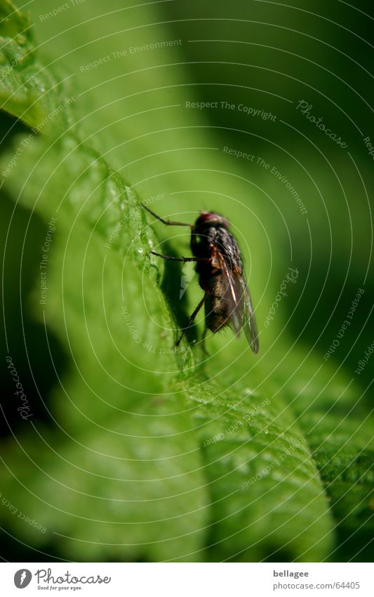 Nature Green Leaf Black Fly Insect Steep