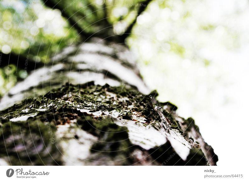 Green Tree Wood Brown Branch Climbing Tree bark Wood flour