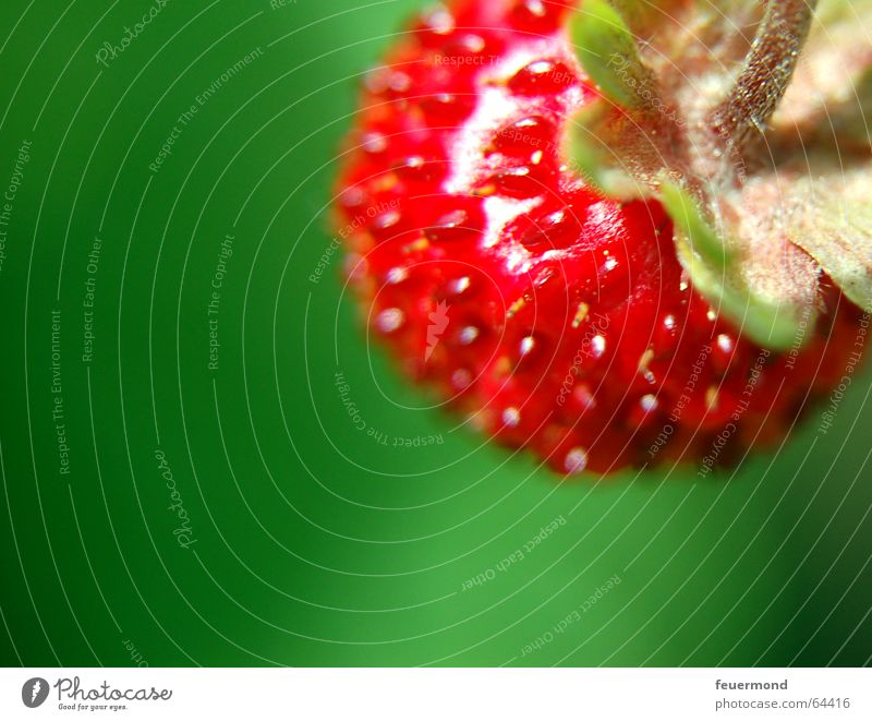Wild Fruit Wild strawberry Red Summer Fruity Strawberry Sun