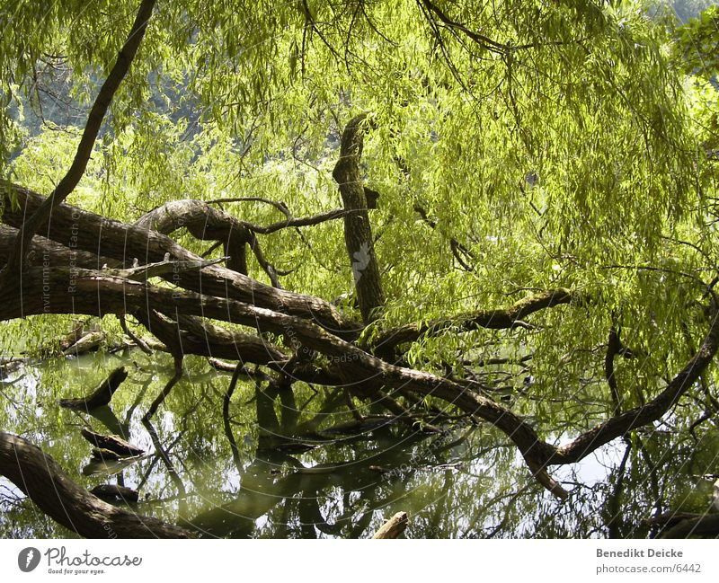 green stuff Tree Lake Park Green Water Branch Tree trunk