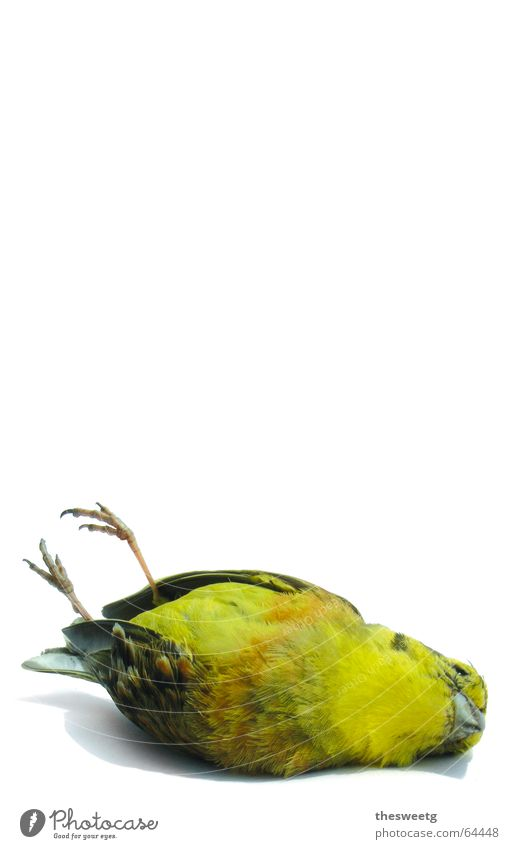 Death Owl birds Bird Driving End Feather Fluid Sudden fall Goodbye Disaster Beak Crash Sparrow Funster Downy feather Strix