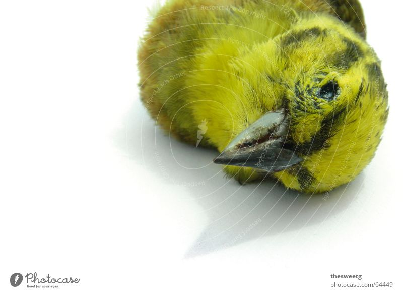 Death Bird Driving End Feather Fluid Sudden fall Goodbye Disaster Beak Crash Sparrow Funster Owl birds Downy feather Strix