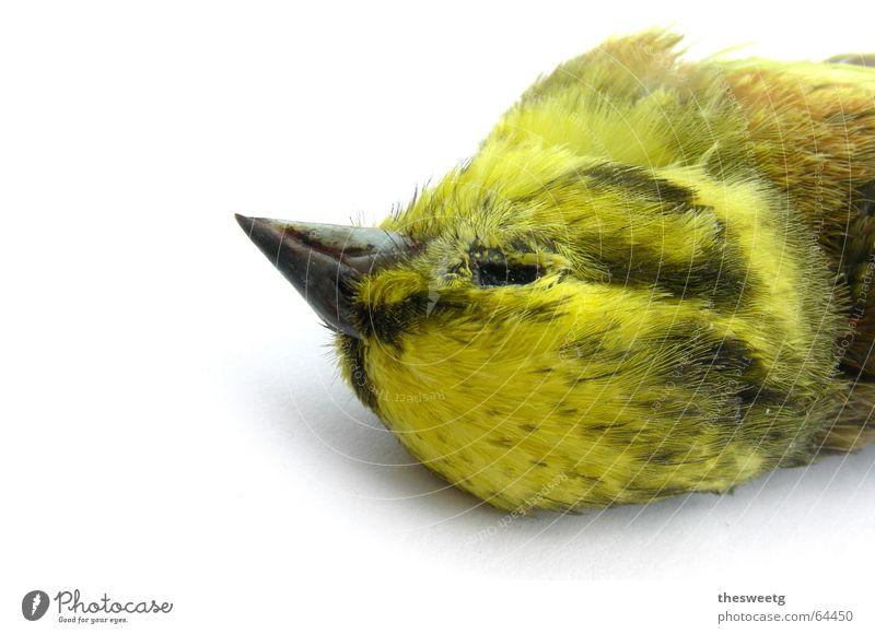 Death Bird Driving End Feather Fluid Sudden fall Goodbye Disaster Beak Crash Owl birds Sparrow Funster Downy feather Strix