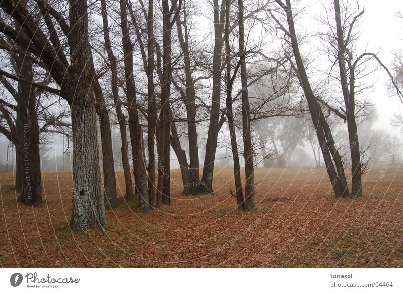 morning crap New South Wales Australia Winter forest trees armidal cold leaves landscape Fog
