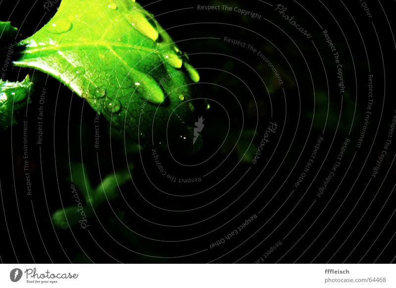 when the rain is gone Leaf Plant Green Dark Rain Water Drops of water