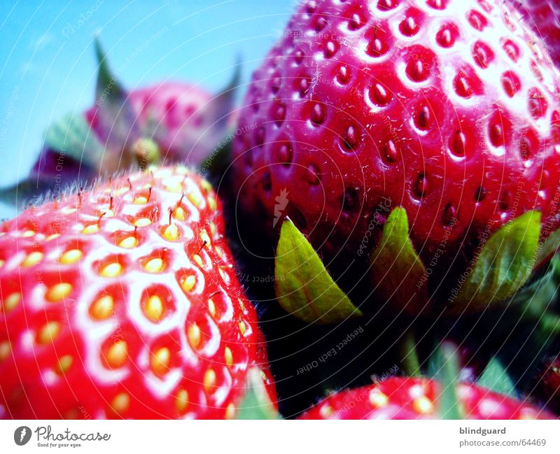 Green Red Fruit Fresh Nutrition Sweet Good Kitchen Appetite Harvest Seed Juicy Sugar Strawberry Gateau Dessert