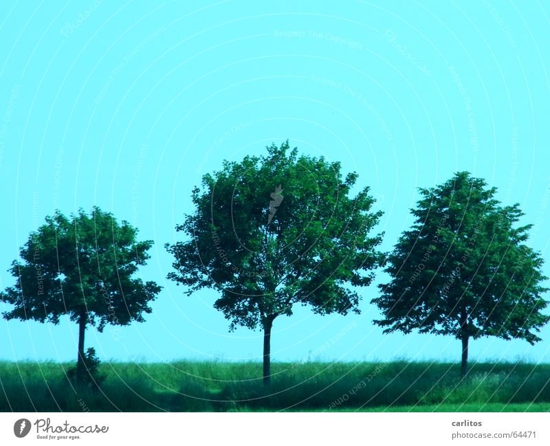 three friends 3 Tree Avenue Roadside Sky Beautiful weather Silhouette Lime tree linden road mother Beier else sound