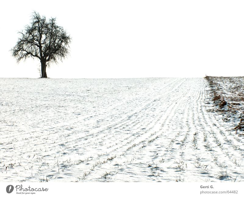 a single tree stands on a snow-covered field in the upper left corner of the picture Agriculture Tree Individual Field Snow White Black Graphic Loneliness