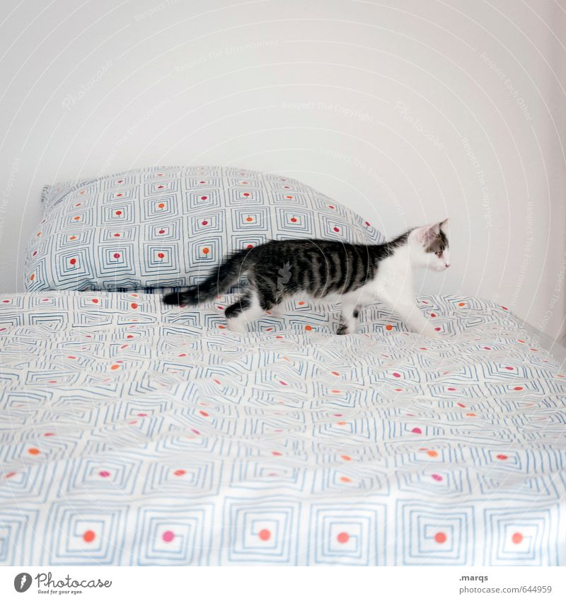 Cat Animal Baby animal Going Bright Flat (apartment) Esthetic Cute Curiosity Bed Search Discover Pet