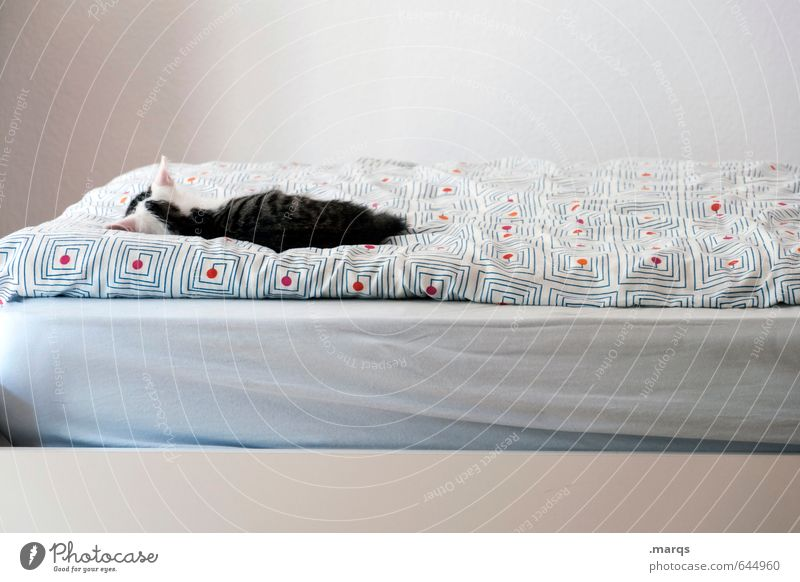 Kalle's sleeping Flat (apartment) Bed Animal Pet Cat 1 Relaxation Lie Sleep Bright Small Beautiful Safety (feeling of) Comfortable Contentment Calm Cute