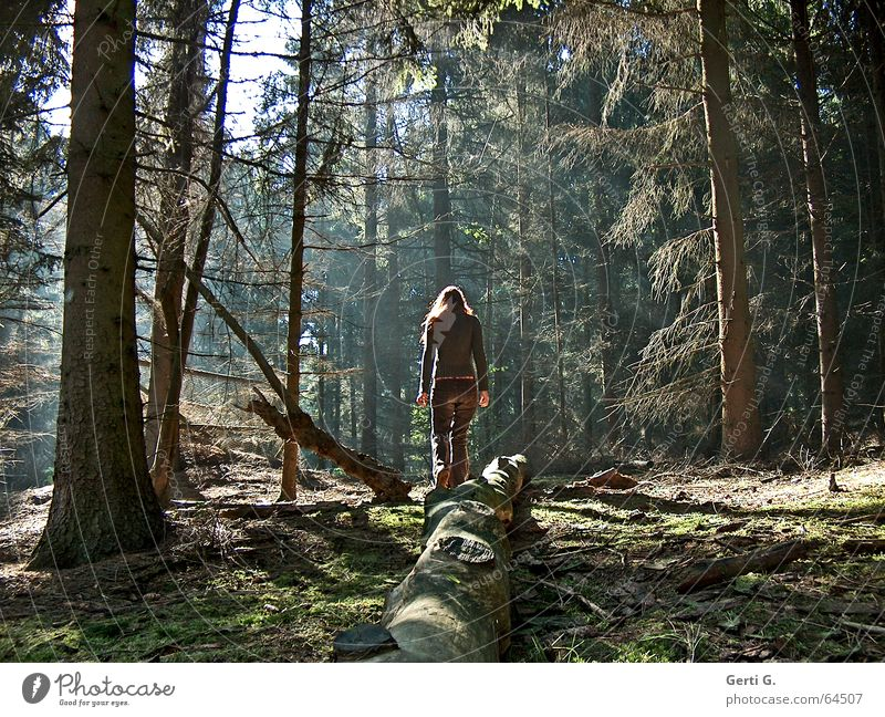 Woman Human being Nature Tree Green Loneliness Forest Brown Bushes Branch Fir tree Tree trunk Branchage Clearing Heathland Coniferous forest