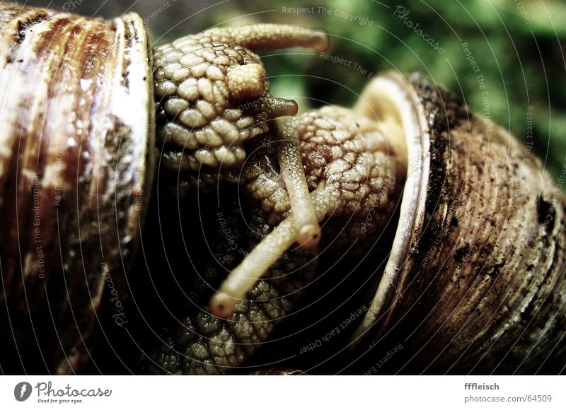 snail eroticism Snail Animal House (Residential Structure) Snail shell Feeler Slowly Disgust Mucus Propagation
