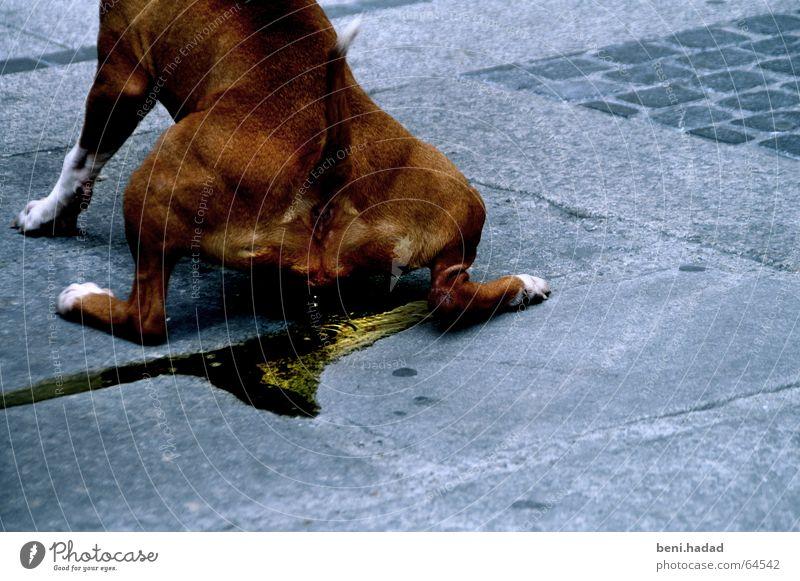let it flow Asphalt dog piss