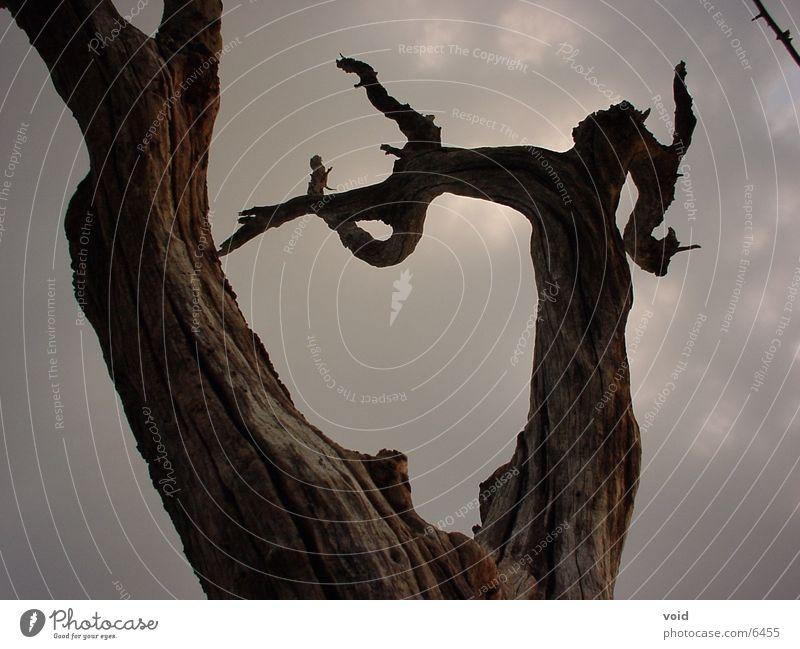 tree Tree Death Sky