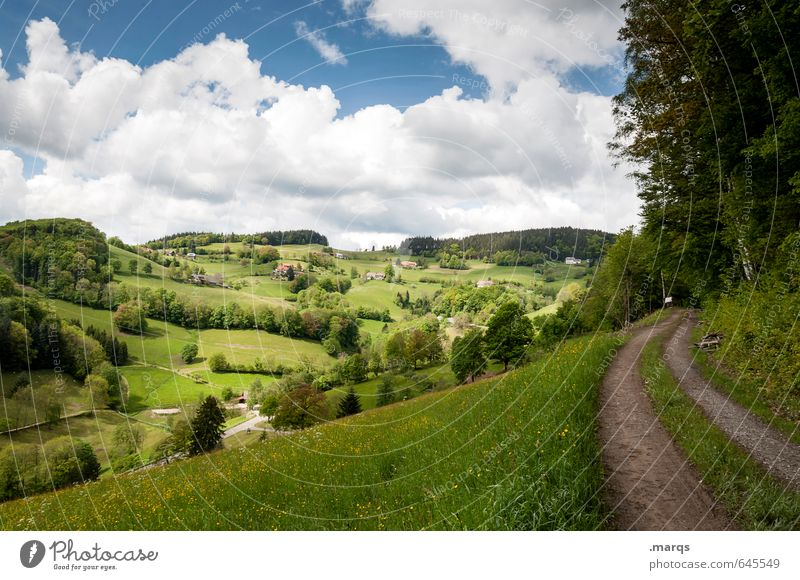 hinterland Tourism Trip Nature Landscape Sky Clouds Summer Beautiful weather Tree Meadow Forest Hill Lanes & trails Relaxation Simple Natural Moody Freedom