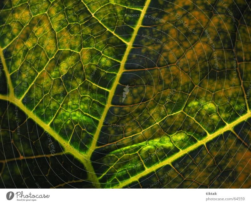 All paths lead to the root Leaf Vessel Underside of a leaf Botany Plant Green Yellow Brown Rachis Light Lighting Limp Leaf green Growth Provision Physics