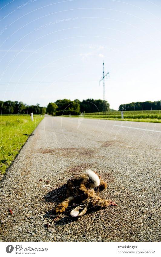 Mittagsschläfchen Sky Transport Traffic infrastructure Street Sleep Threat Broken Attentive Watchfulness Caution Death Fatigue Dangerous Respect