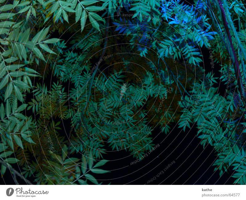 Garden of Eden Treetop Green Bushes Plant Night Floodlight Paradise Blue Lighting