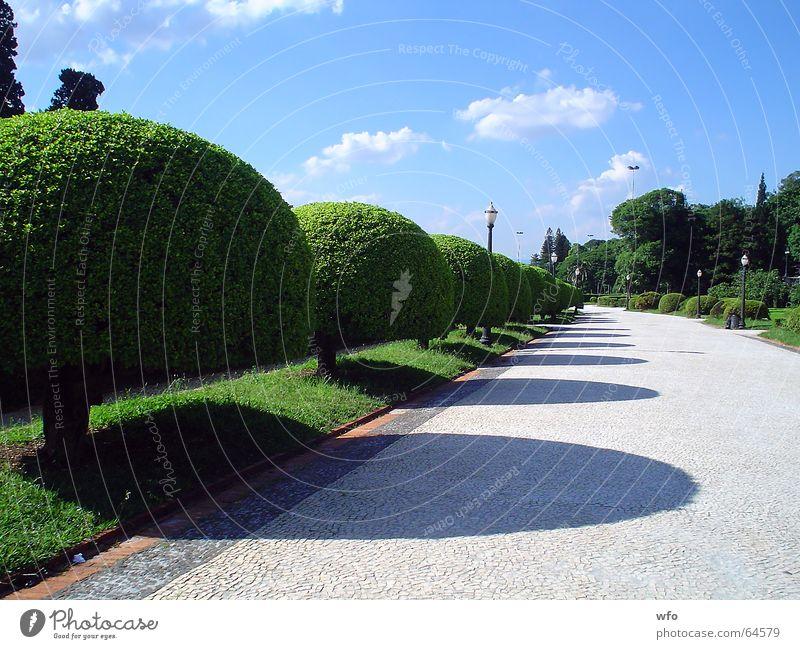 Garden's Ipiranga museum Sky Passage Nature Brazil Park Museum ipiranga tree blue way road