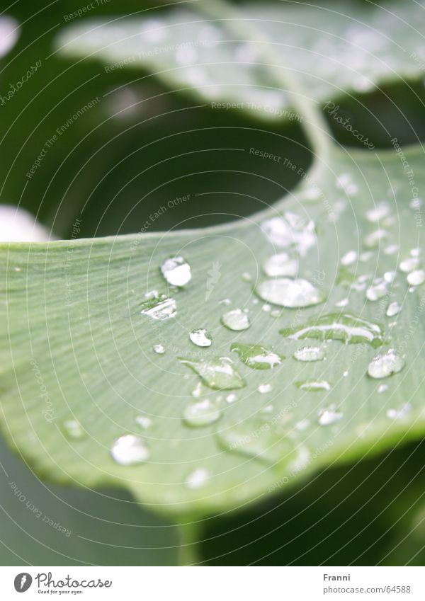 Nature Tree Green Plant Leaf Garden Rain