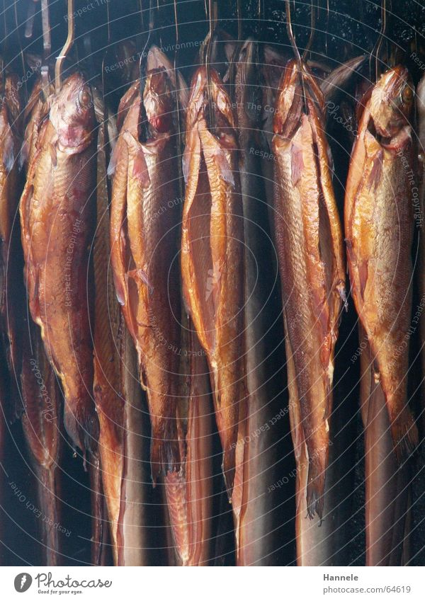 death sentence Hang Multiple Kipper made a noise Nutrition Death Many Mince Smoke hung Fish Smoked