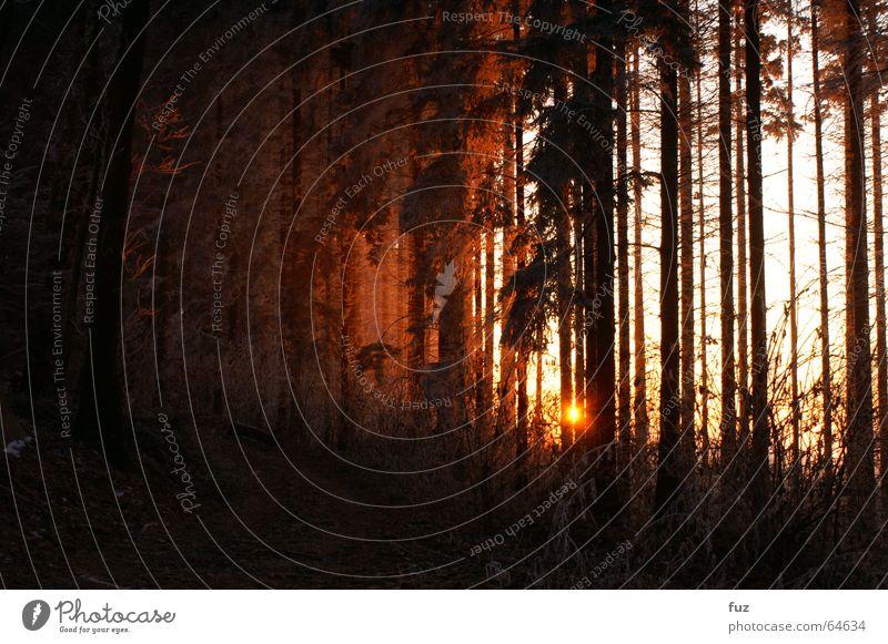 Nature Sun Winter Forest Freedom Lanes & trails Landscape Fog Romance Dusk Black Forest