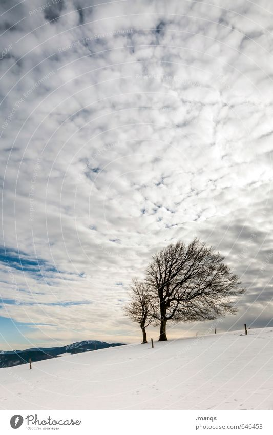 Fully booked Trip Winter vacation Nature Landscape Sky Clouds Tree Beech tree Hill Relaxation Simple Bright Natural Beautiful Moody Colour photo Exterior shot