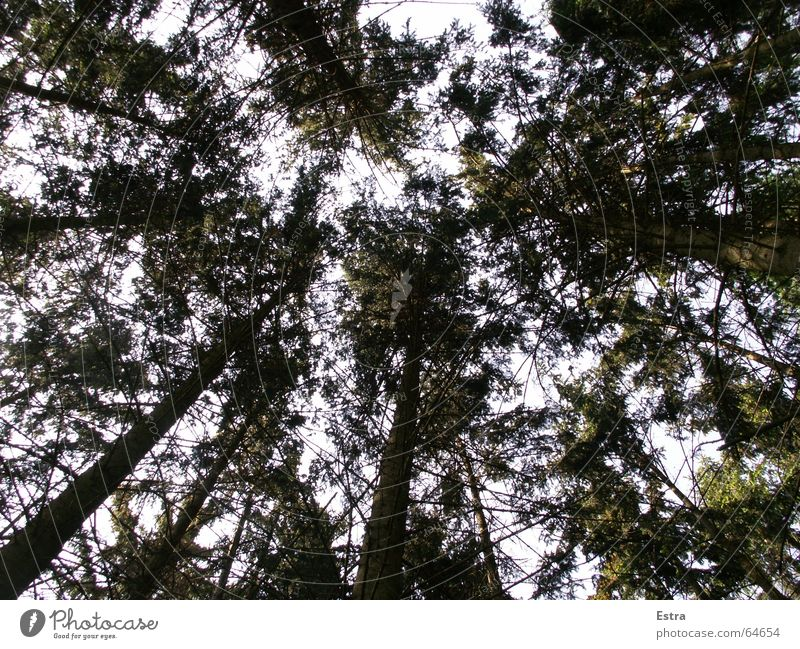 Green roof Comforting Tree Dark Forest Narrow Exterior shot Sky Nature Bright Germany Contentment Tree trunk anxious