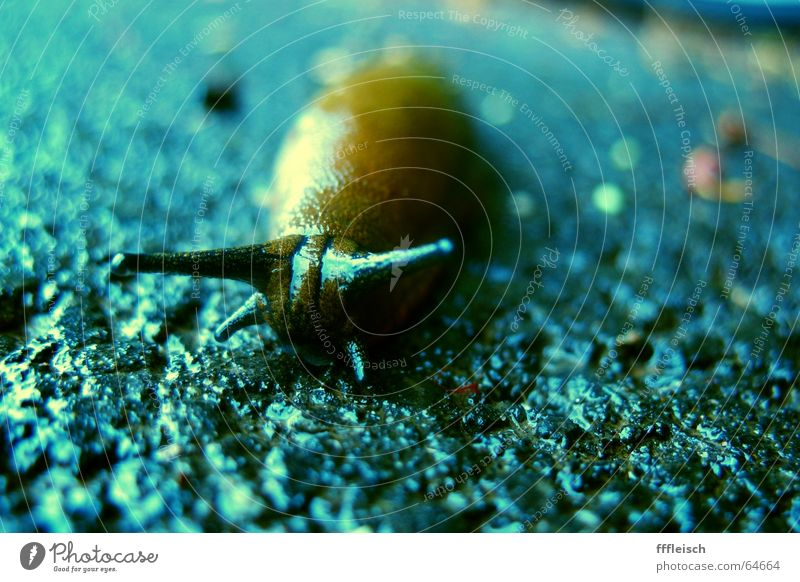 Lonely snail Loneliness Slug Animal Asphalt Grief Snail pecker blue Sadness