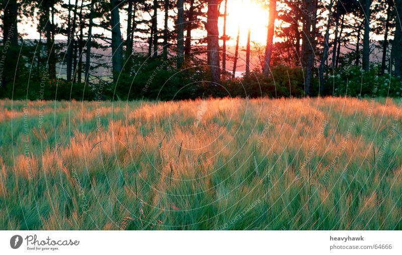 Nature Tree Field