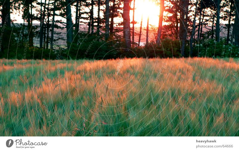 The pleasant atmosphere of nature Field Tree Sunset Nature