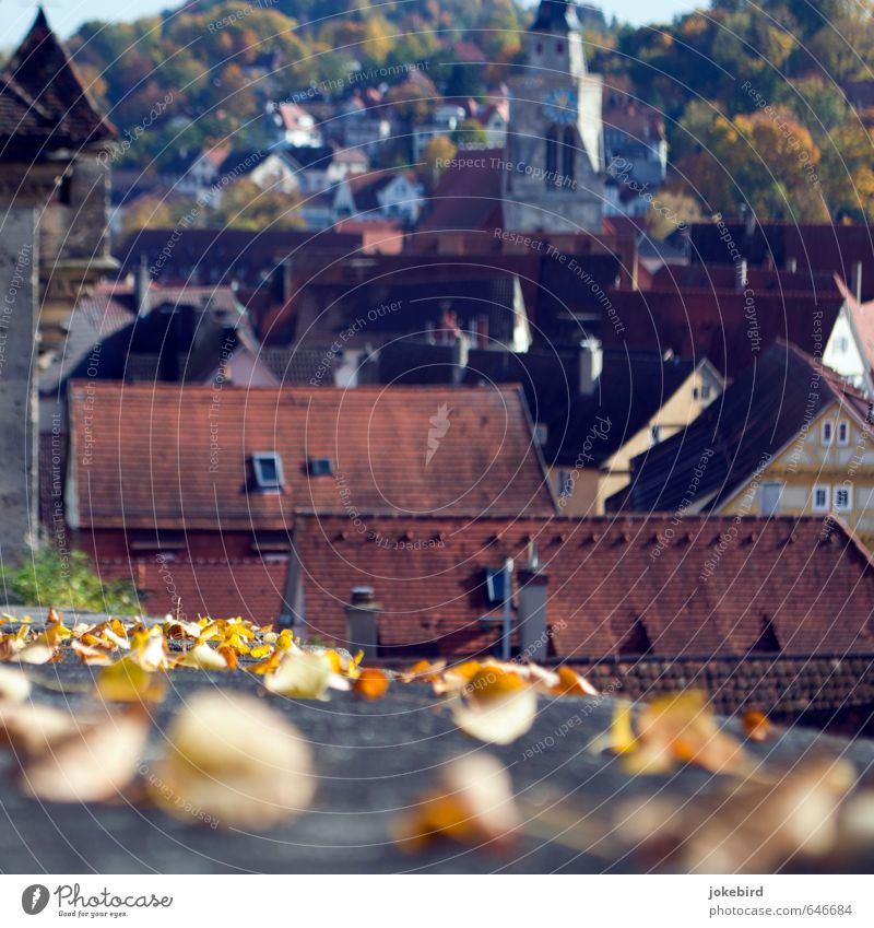 old town Autumn leaves Deciduous forest Automn wood Hill Slope Tübingen Downtown Old town Populated House (Residential Structure) Church Tower