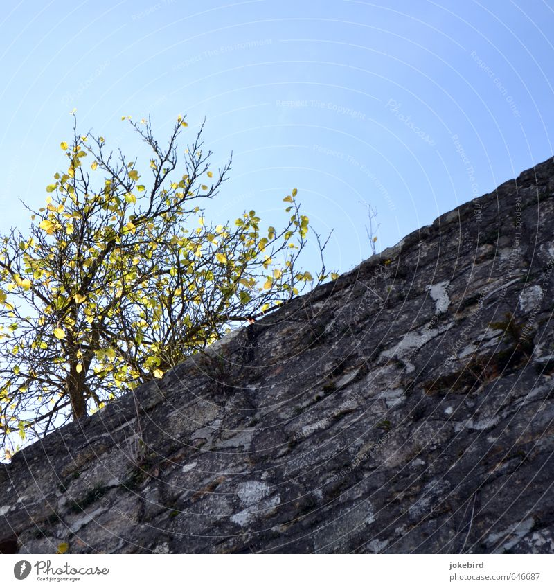 Blue Tree Wall (building) Autumn Wall (barrier) Stone Illuminate Cloudless sky Autumn leaves Diagonal Moss Autumnal Autumnal colours Bright Colours City wall