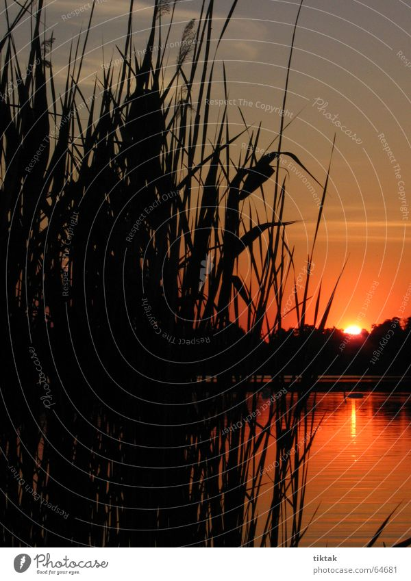 Nature Sky Sun Red Calm Lamp Freedom Dream Lake Think Moody Blaze Romance Common Reed Burn