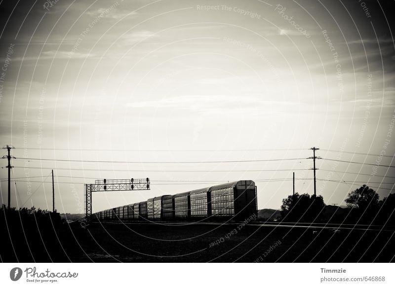 train, California Transport Logistics Train travel Railroad Freight train Longing Wanderlust Movement Horizon USA Black & white photo Exterior shot