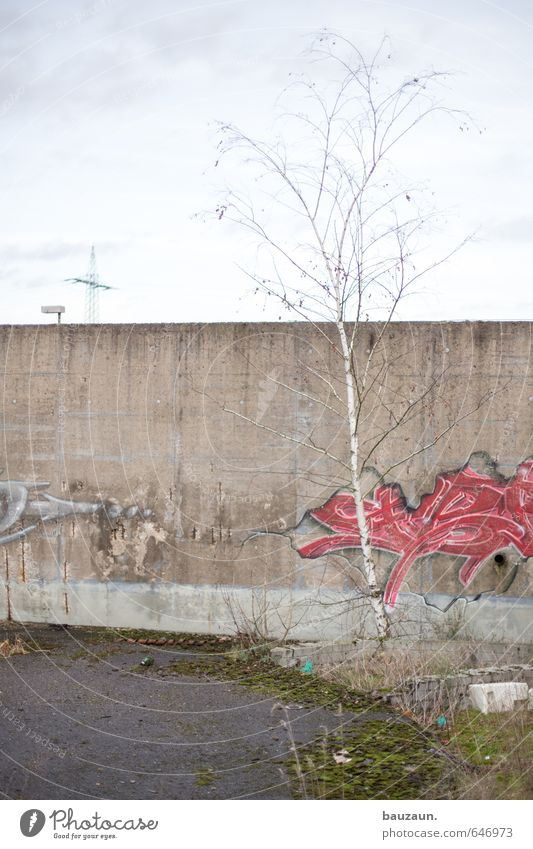 birch. Environment Nature Sky Clouds Climate Weather Plant Tree Grass Bushes Meadow Ruin Wall (barrier) Wall (building) Street Lanes & trails Electricity pylon