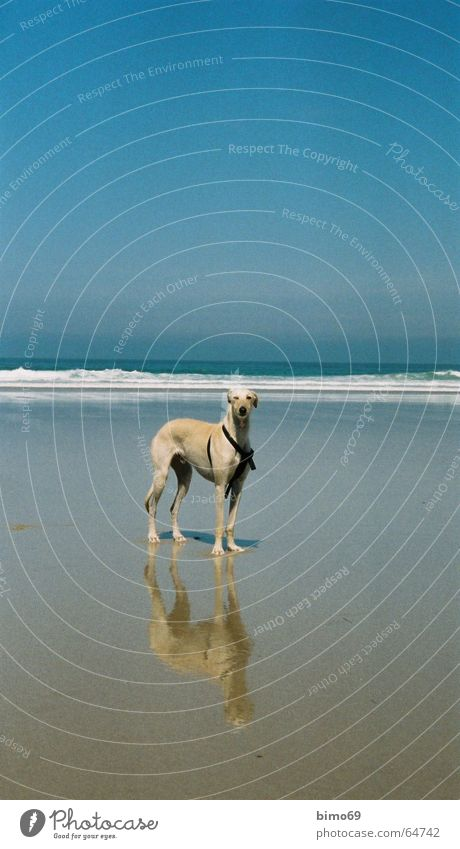 Water Ocean Beach Vacation & Travel Animal Far-off places Freedom Dog Contentment Waves Places Greyhound