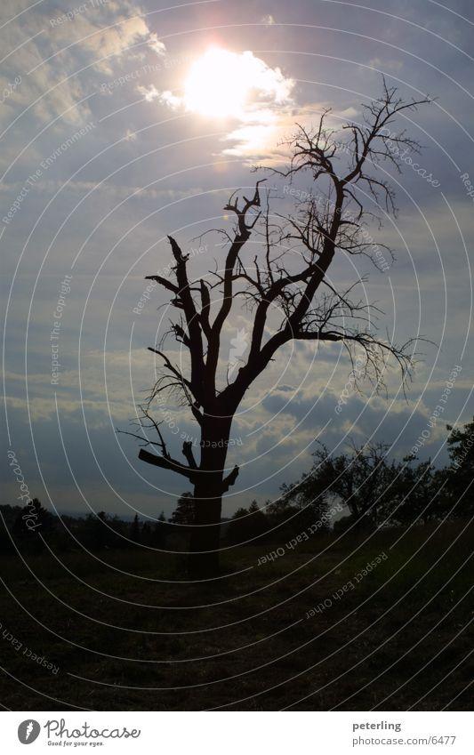 Black Hole Sun Tree Back-light Grief Death
