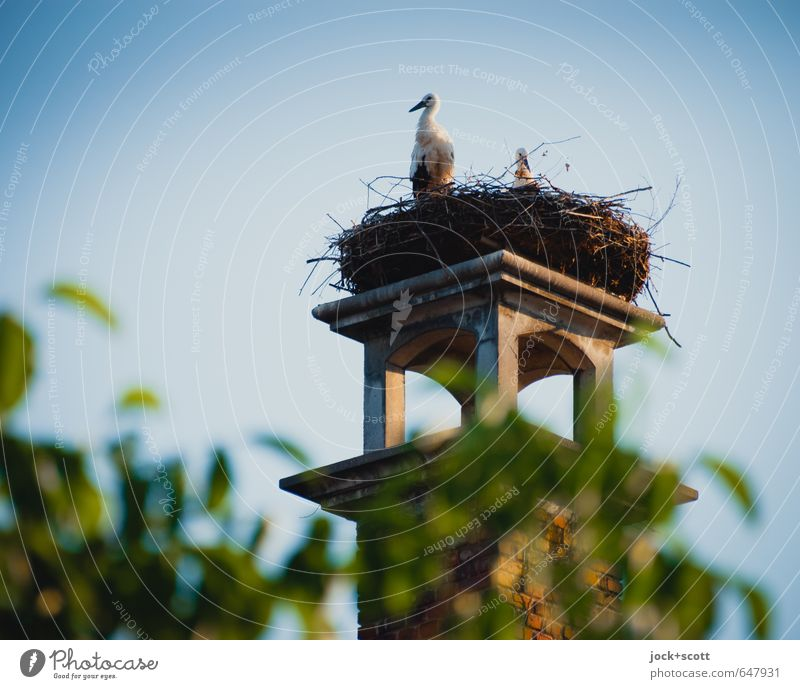 watchtower for storks Cloudless sky Beautiful weather Middle Franconia Chimney Wild animal Stork 2 Animal Pair of animals Healthy Together Natural Above Warmth