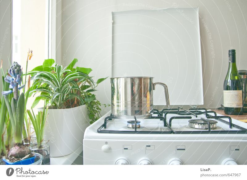 Pot searches lid Nutrition Lunch Dinner Wine Lifestyle Leisure and hobbies Living or residing Flat (apartment) Arrange Plant Fern Amaryllis Stove & Oven