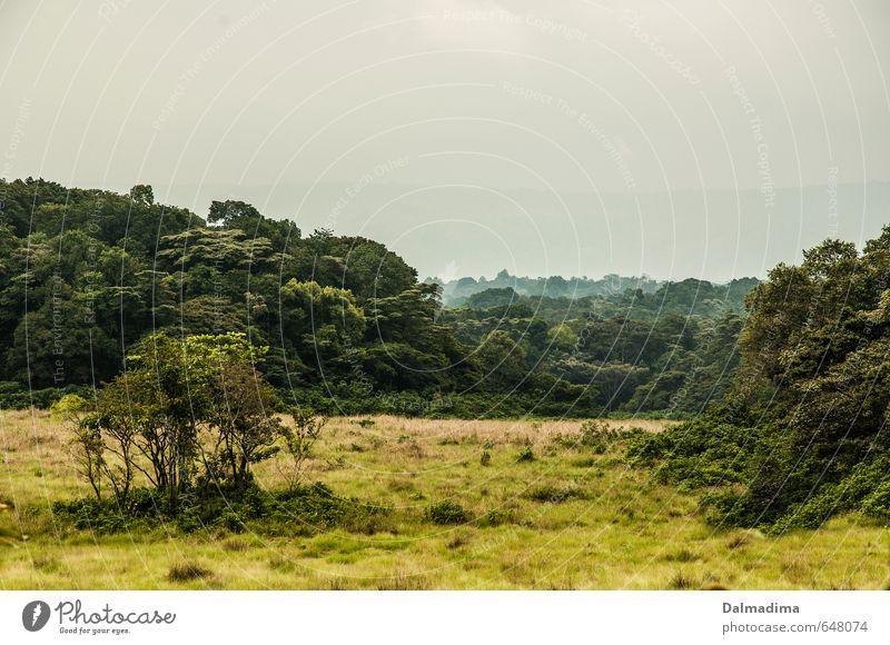 Kakamega Rainforest Vacation & Travel Tourism Trip Adventure Far-off places Safari Expedition Hiking Environment Nature Landscape Plant Animal Air Climate