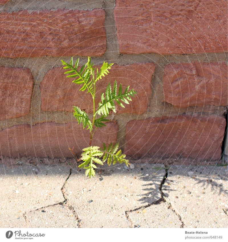 Power where there's a will, there's a way. Environment Nature Earth Sand Beautiful weather Plant Bushes Foliage plant Village Wall (barrier) Wall (building)